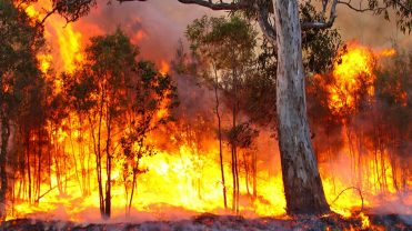 bushfire_The_BFD-1068x601