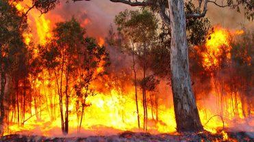 bushfire_The_BFD-1068x601